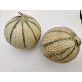 Melon Charentais - Unité